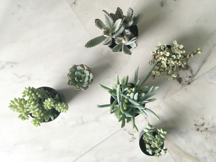 Array of Succulents