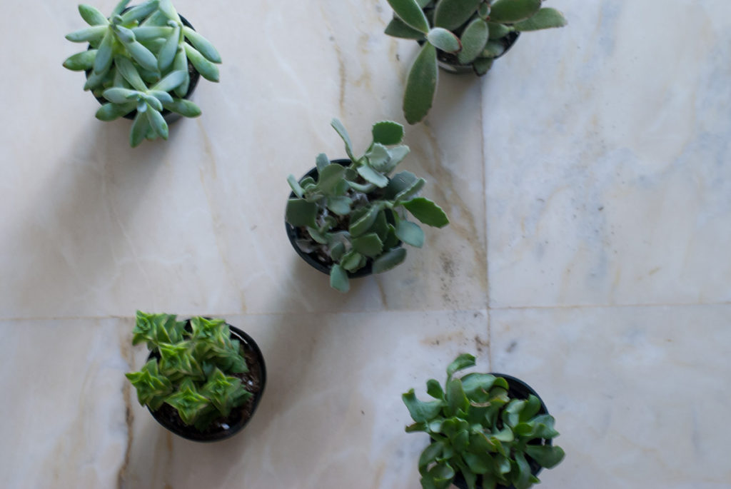 diy-succulents-1