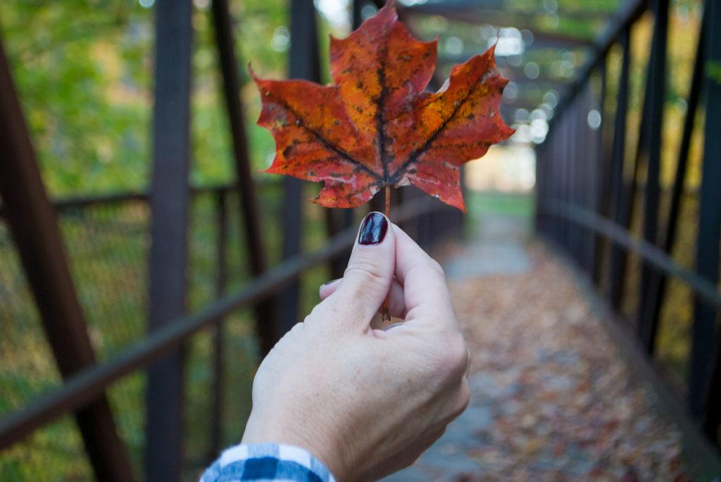 fall-leaf-1