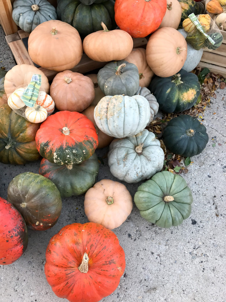 fall-pumpkins-1