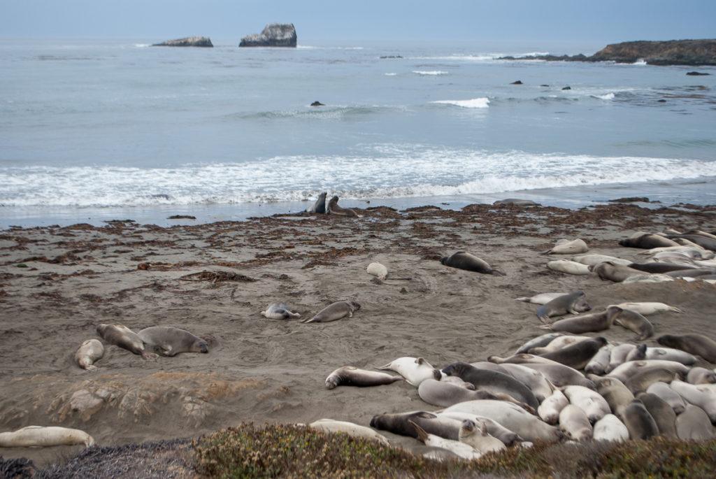 pch-elephant-seals-1
